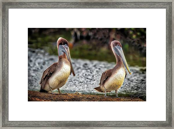 Framed Print featuring the photograph Stan And Ollie by David A Lane