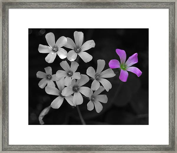 Stand Up Stand Out Framed Print