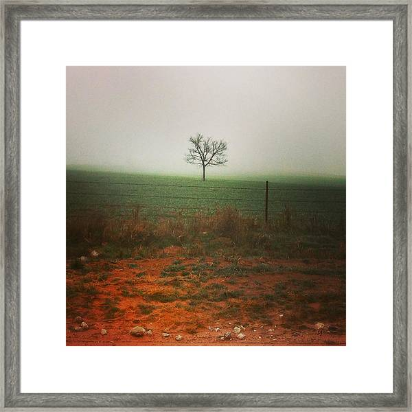 Standing Alone, A Lone Tree In The Fog. Framed Print