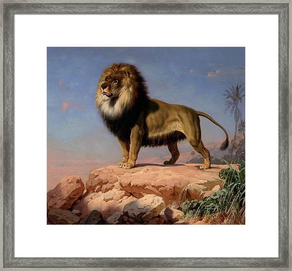 Standing Lion Framed Print