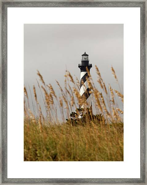 Standing Tall At Hatteras Framed Print