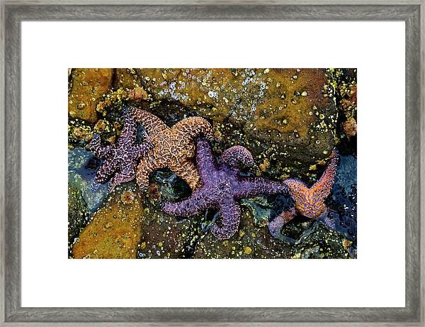 Star Family Framed Print