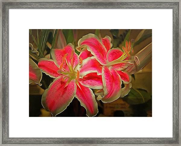 Star Gazer Lilies Framed Print
