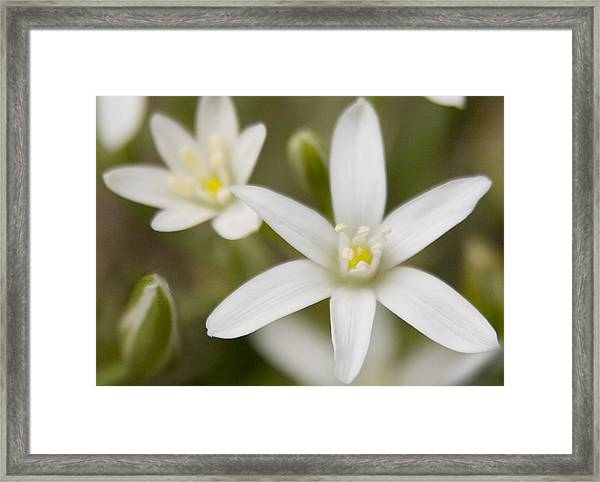 Star Of Bethlehem Framed Print
