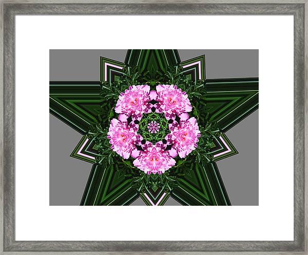 Star Peony Framed Print