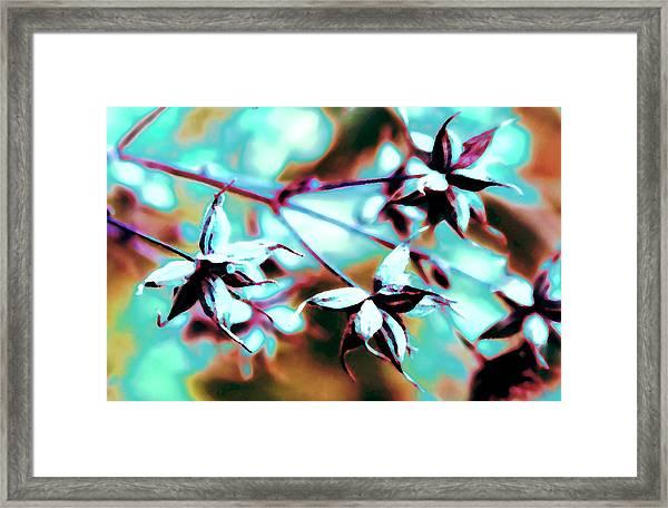 Star Seedpods 2 Framed Print