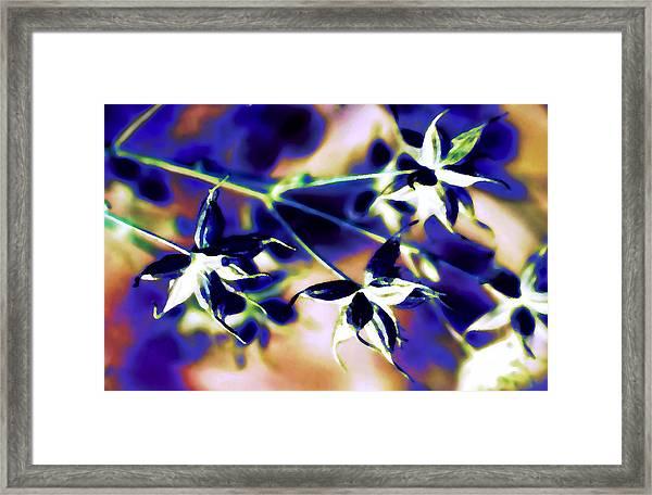 Star Seedpods 3 Framed Print