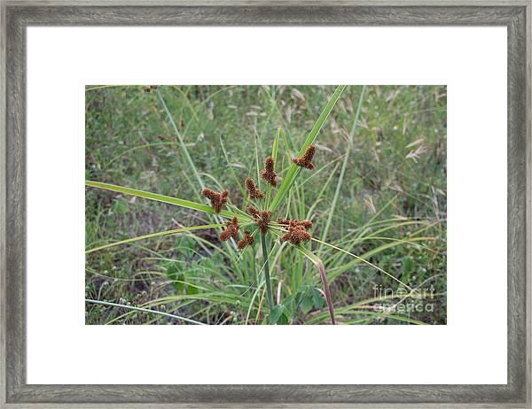 Starburst Of Nature Framed Print