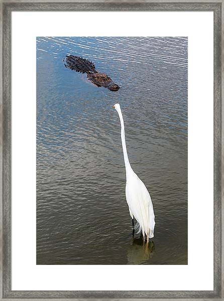 Framed Print featuring the photograph Staredown At Hunting Beach State Park - March 31, 2017 by D K Wall