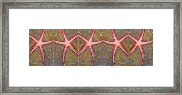 Starfish Pattern Bar Framed Print