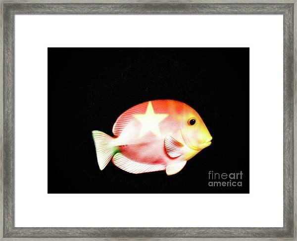 Starfish  Framed Print by Steven Digman