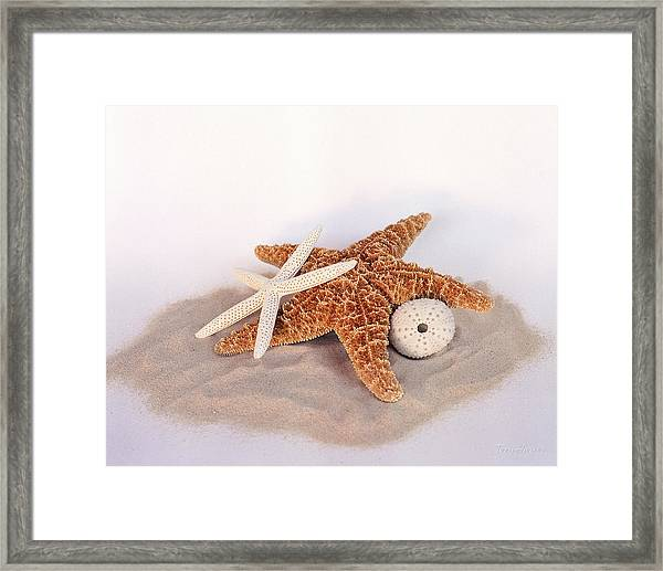 Starfish Still Life Framed Print