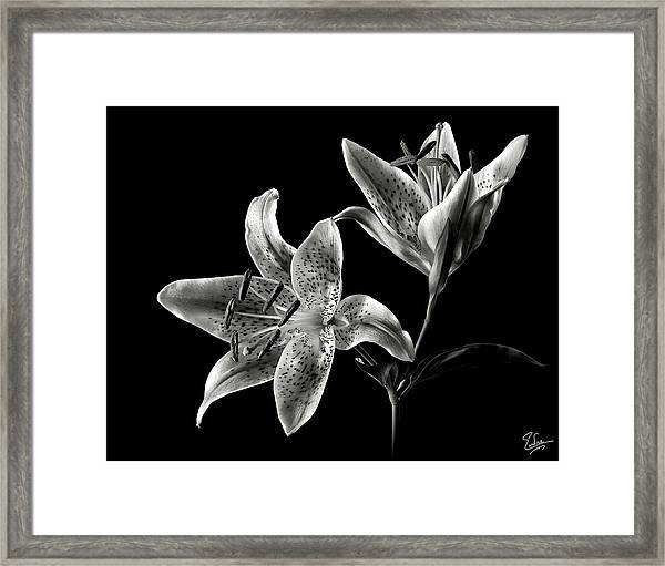 Stargazer Lily In Black And White Framed Print