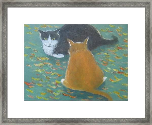 Staring Contest  Framed Print