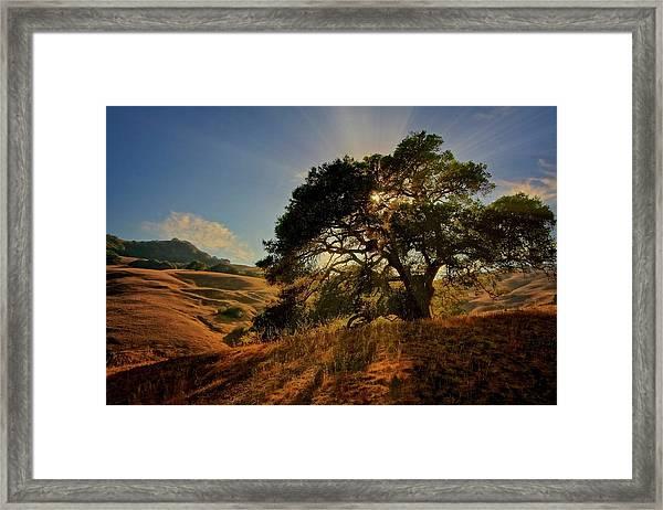Starlight, California Oak Framed Print