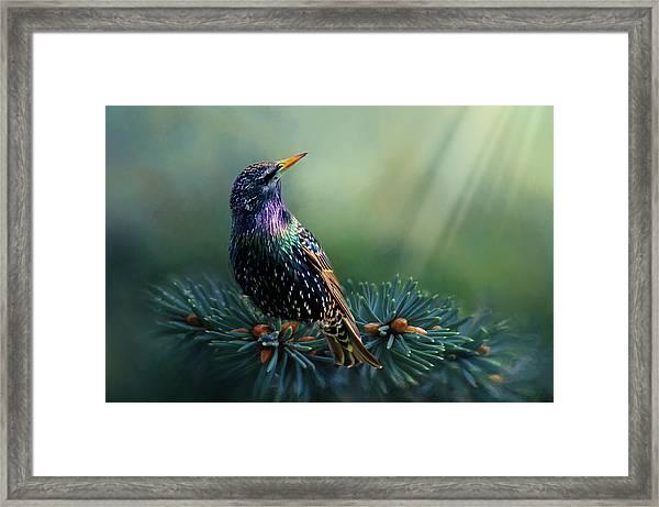 Starling Framed Print