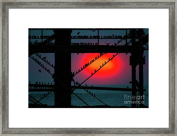 Starlings Against The Setting Sun Framed Print