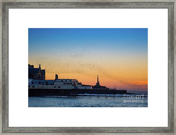 Starlings At Sunset In Aberystwyth Framed Print