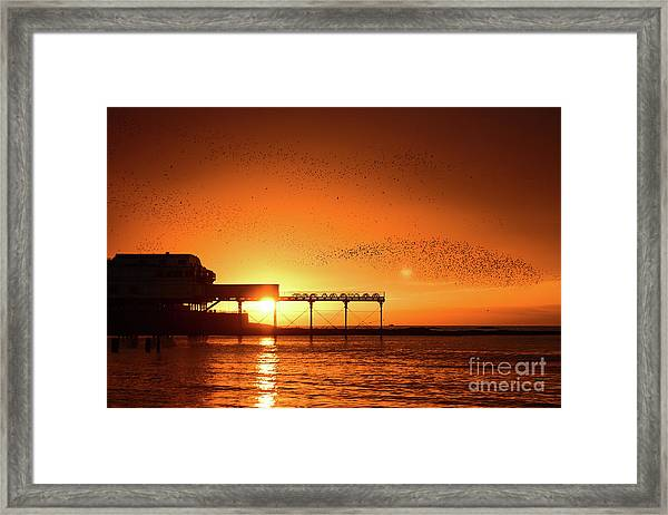 Starlings At Sunset Over Aberystwyth Pier Framed Print