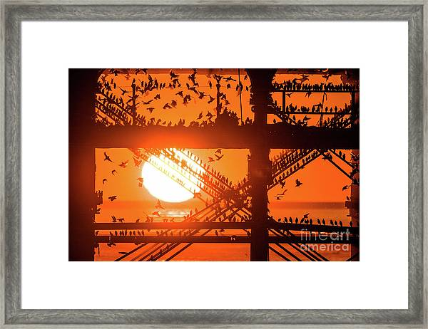 Starlings At Sunset Under Aberystwyth Pier Framed Print