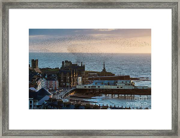 Starlings Over Aberystwyth On The West Wales Coast Framed Print