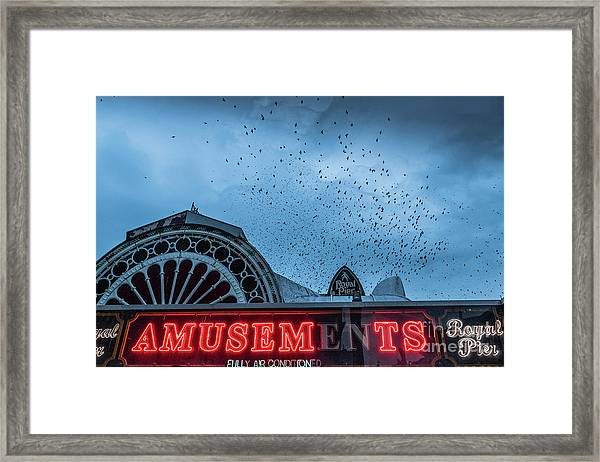 Starlings Over Aberystwyth Royal Pier Framed Print