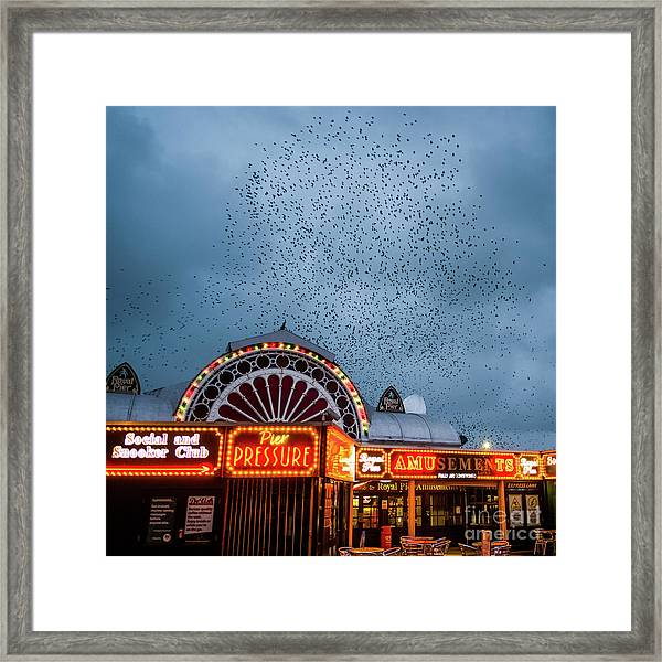 Starlings Over The Neon Lights Of Aberystwyth Pier Framed Print