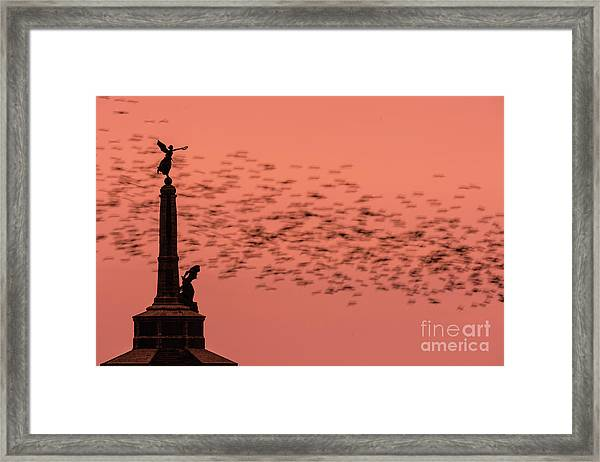 Starlings Sweeping Past Aberystwyth War Memorial Framed Print