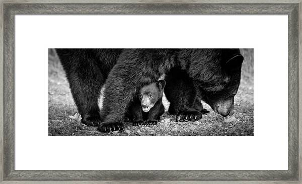 Staying Close-bw Framed Print