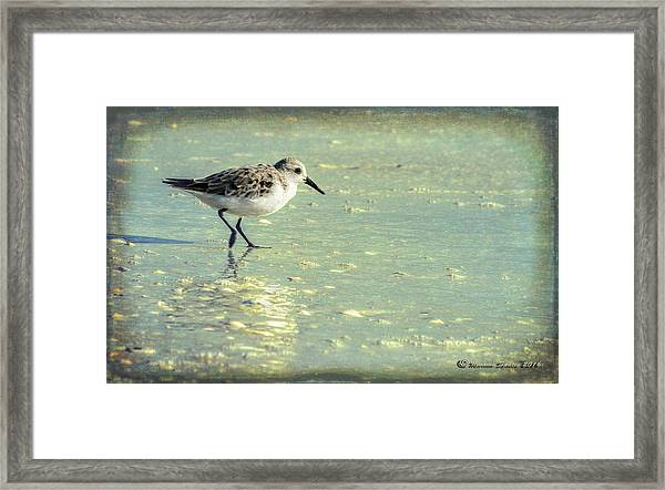 Staying Focused Framed Print