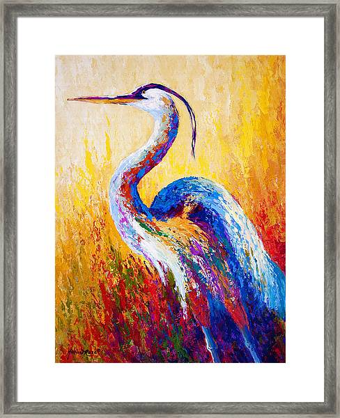 Steady Gaze - Great Blue Heron Framed Print