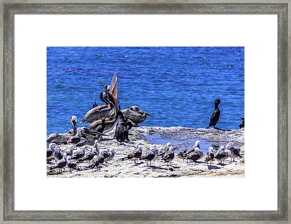 Pelican Sticking His Neck Out Framed Print
