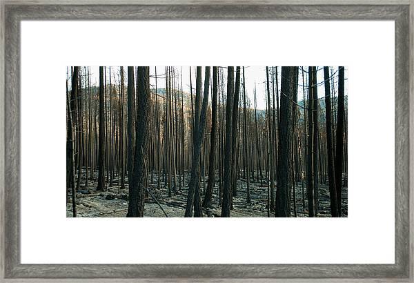 Stickpin Framed Print