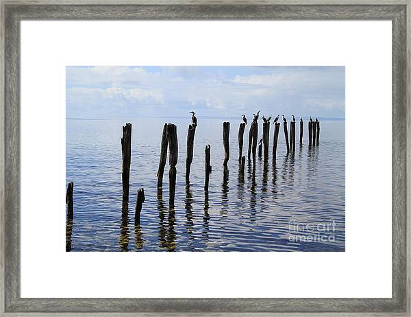 Sticks Out To Sea Framed Print
