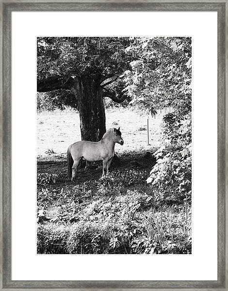 Still Framed Print