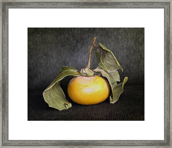 Still Life With Persimmon Framed Print