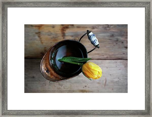 Still Life With Tulip Framed Print