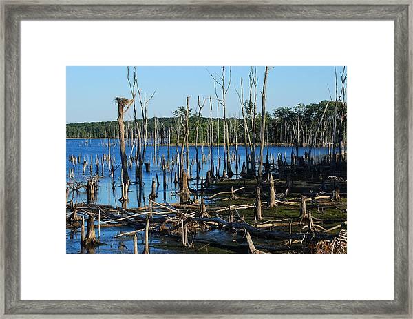 Still Wood - Manasquan Reservoir Framed Print