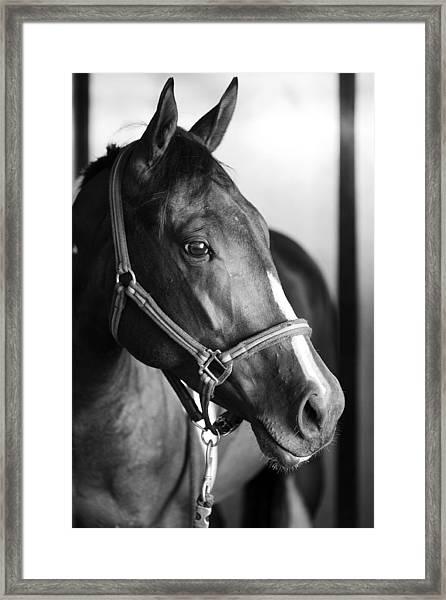 Horse And Stillness Framed Print
