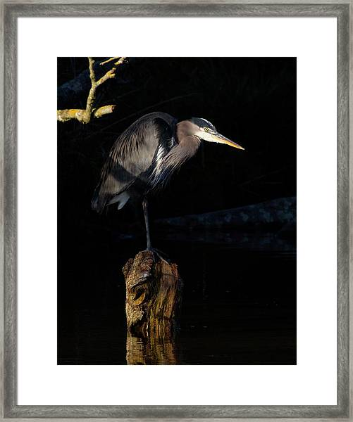 Stillness On The Hunt Framed Print