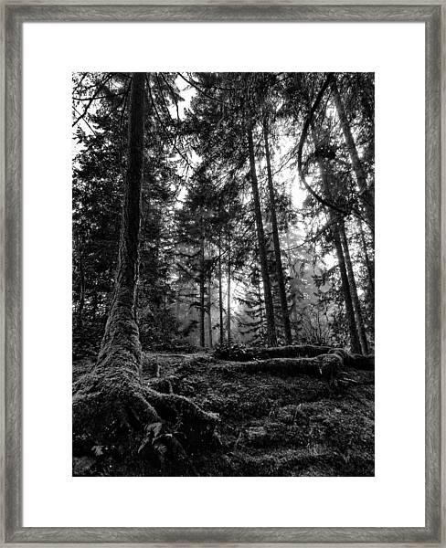 Stillpoint Framed Print
