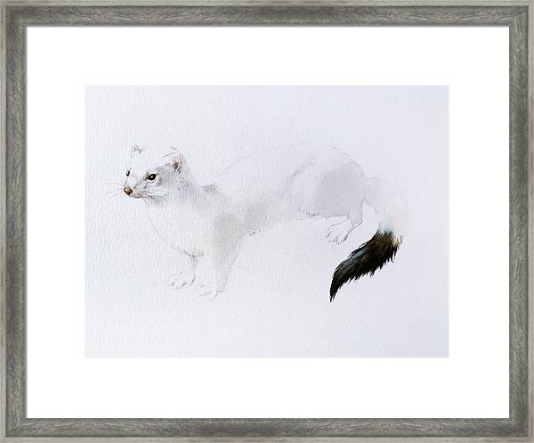 Stoat Watercolor Framed Print