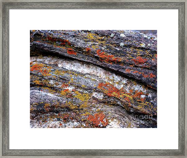 Stone And Lichen Framed Print