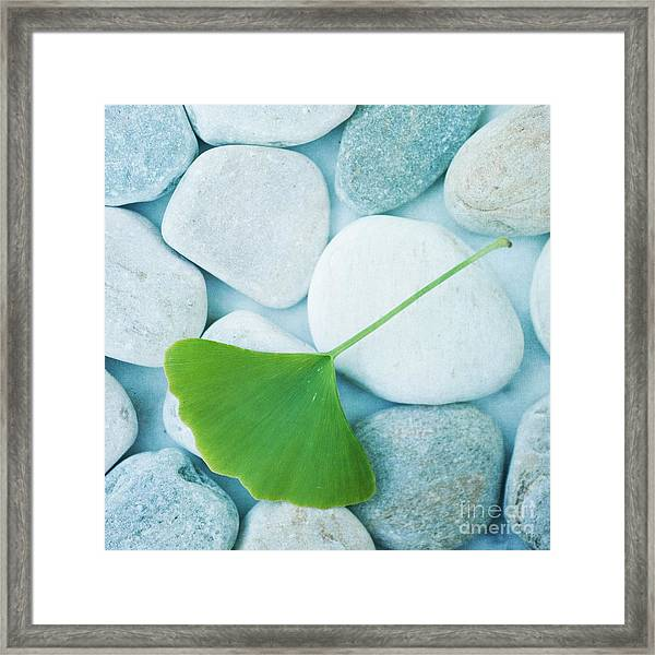 Stones And A Gingko Leaf Framed Print