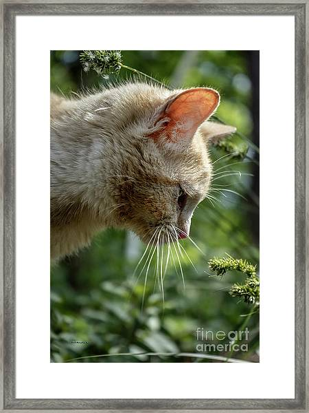 Stop And Smell The Flowers 9433a Framed Print