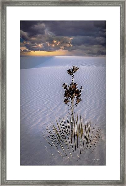 Storm Light At White Sands Framed Print