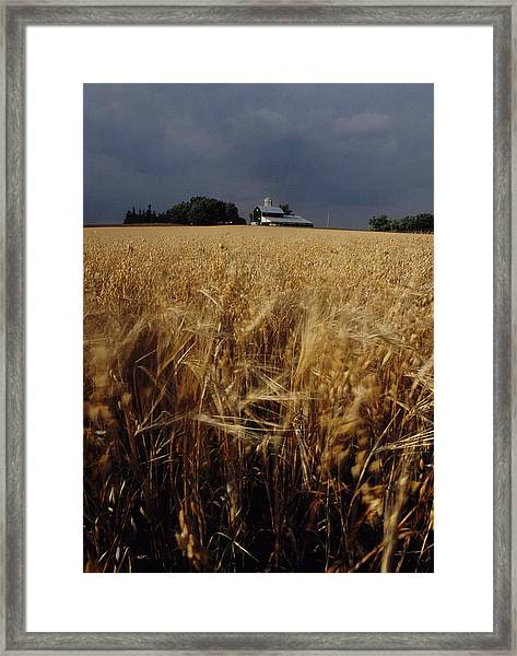 Storm Over Wheat Field  Framed Print