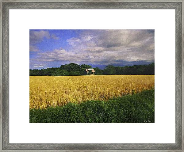 Stormy Old Barn In Wheat Field 2 Framed Print