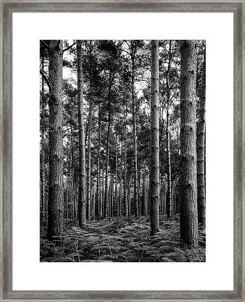 Framed Print featuring the photograph Straight Up by Nick Bywater