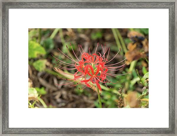 Strange Flower Framed Print